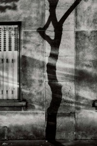 paris_tree_shadows-michael_wolf-4-590x883